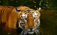 Nehru Zoological Park, Hyderabad Tourist Attraction