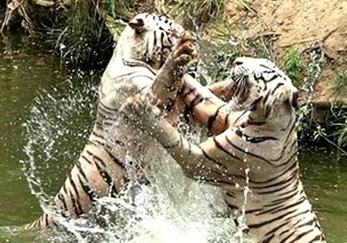 Nehru Zoological Park Hyderabad Timings Entry Ticket Cost Price
